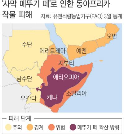 사막 메뚜기떼의 역습..기후변화가 만든 재앙1.jpg