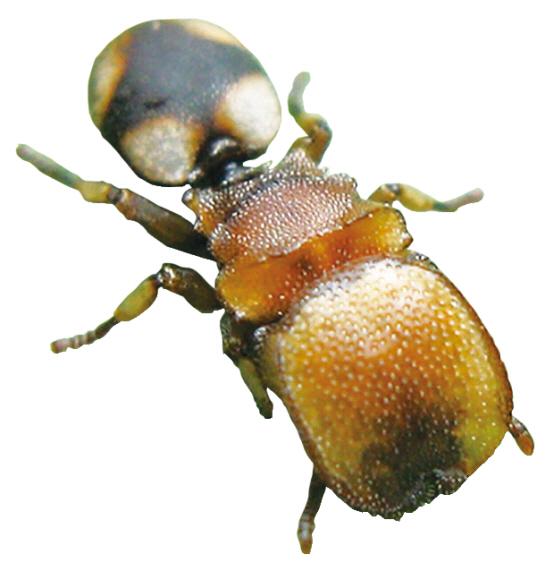 개미, 뇌에 계급장 달고 태어난다.jpg