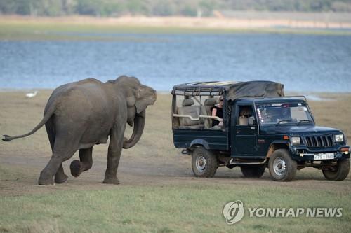 코끼리에게서 암 정복 길을 찾다..좀비유전자 규명2.jpg