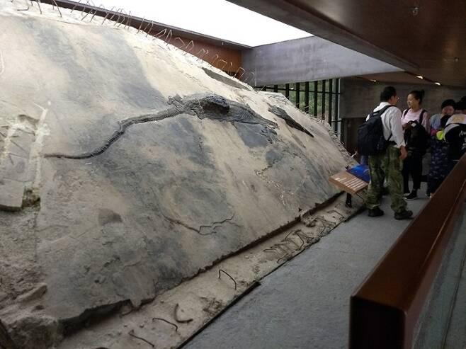 거대 파충류 먹고 죽은 2억년 전 어룡 화석 발견1.jpg