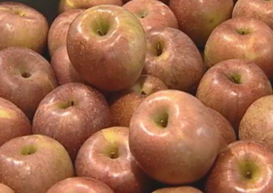 아침 사과는 금 저녁 사과는 독은 진실1.jpg