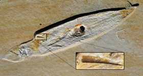 1억5000만년 전 익룡의 오징어 사냥 순간 포착.jpg