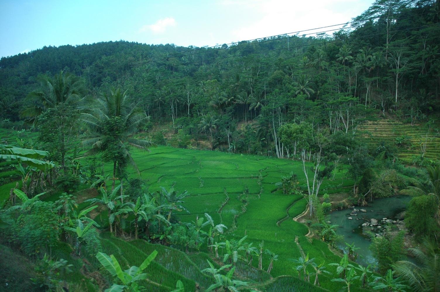 인도네시아 농촌풍경 (4).jpg