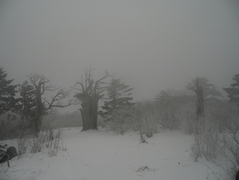 눈덮힌 태백산 (44).jpg